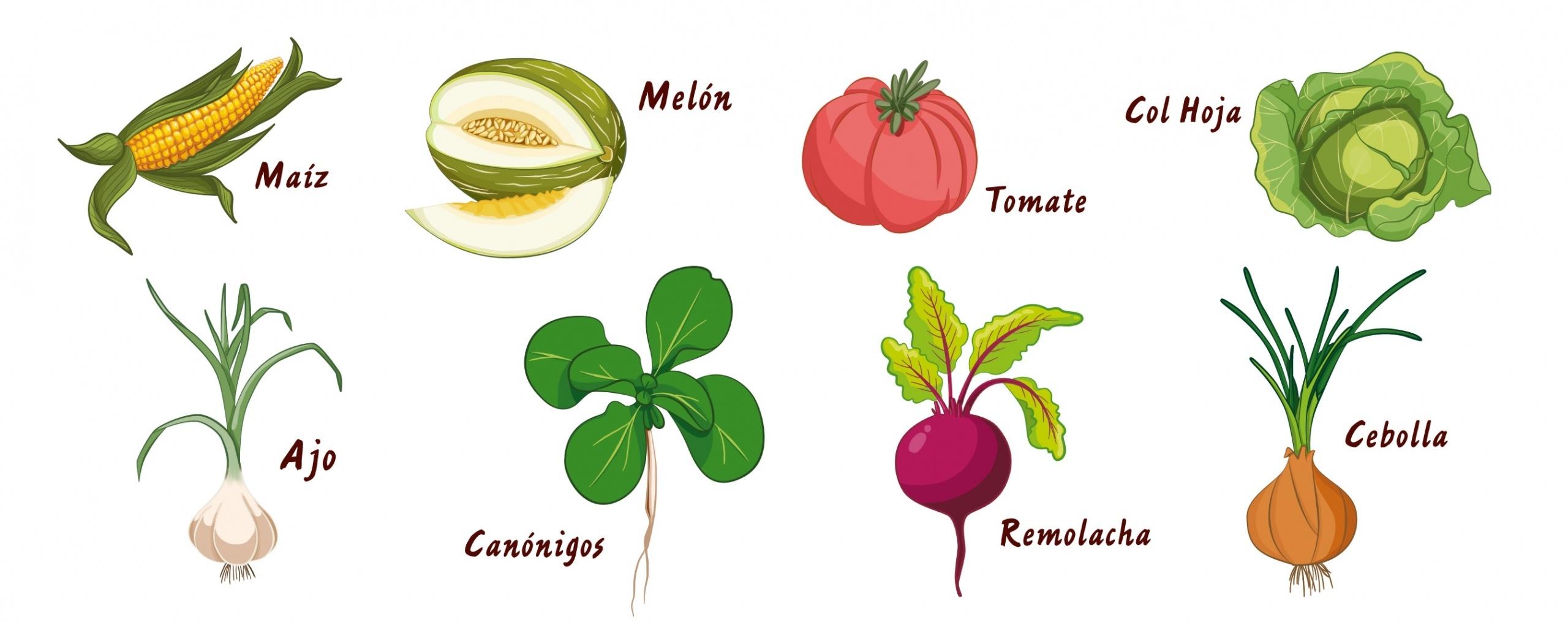 ilustracion frutas y hortalizas